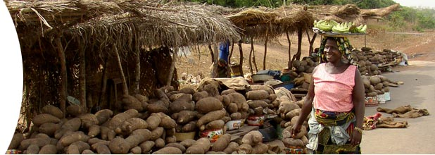 Yams in Benin. Photo: J-L Pham ©IRD